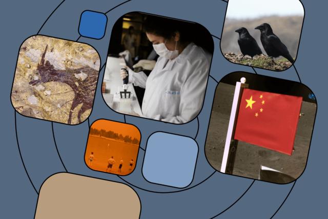 Главные научные итоги-2020. Не поверите, но ученые весь год занимались не только коронавирусом! Вот самые важные открытия по версии журналов Science и Nature