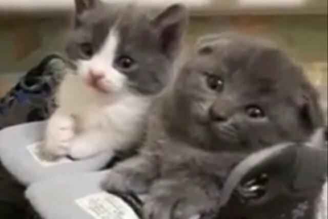 Найден лучший аккаунт в тиктоке — там котята Гугл и Яндекс изображают шоферов и спят в зимних ботинках
