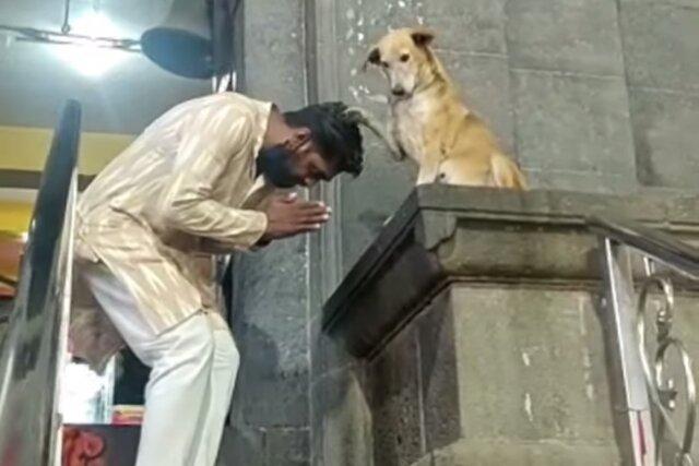 В Индии собака нашла свое призвание. Она сидит у дверей храма и благословляет посетителей