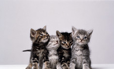 Аллергия на кошек: как ужиться с любимой Муркой, если на нее даже смотреть больно?