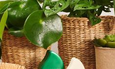 Зеленый свет: косметический гигант L'Oreal отказывается от нефтяных продуктов, чтобы изменить индустрию красоты