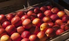 Яблочная диета: экспресс-похудение и детокс