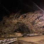 Сильный ветер повалил деревья в городах Ставрополья