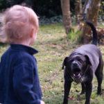 20 тысяч рублей выплатит мэрия Лермонтова родителям искусанного собакой ребенка