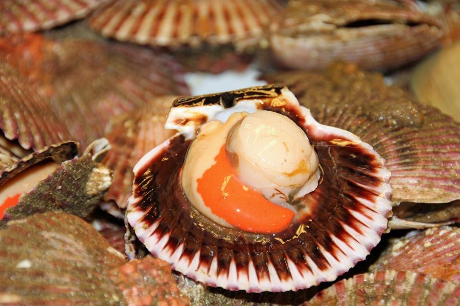 Приморец получил условный срок за контрабанду дикого морского гребешка