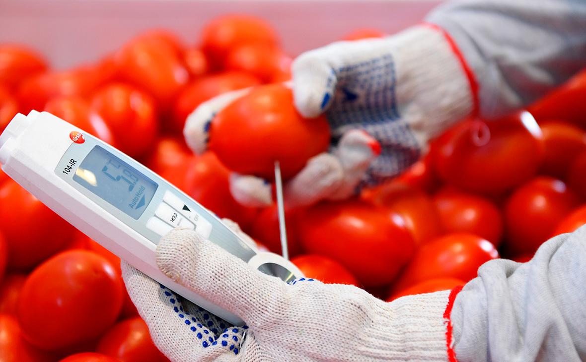 Россия запретила ввоз помидоров из одной из областей Армении