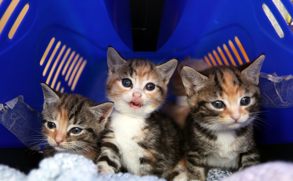 Спрос на котят среди пользователей Avito из Москвы вырос на 57%