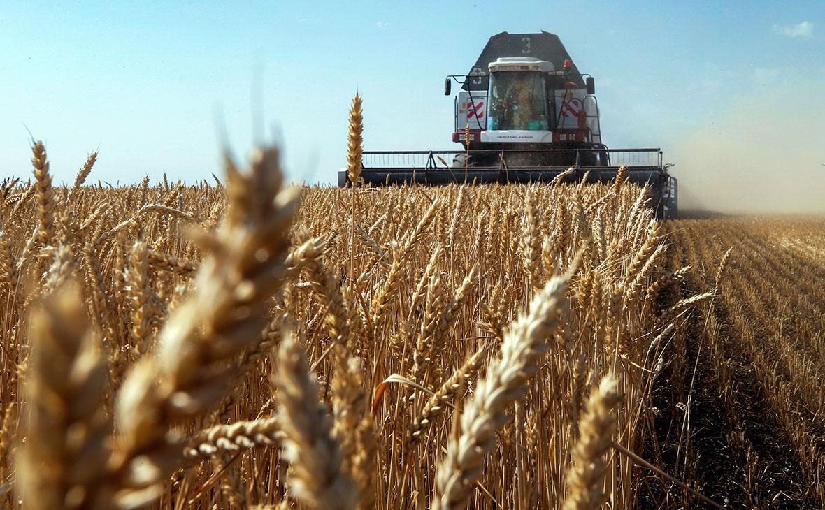 Росстат оценил урожай зерна в 2020 году как второй в истории