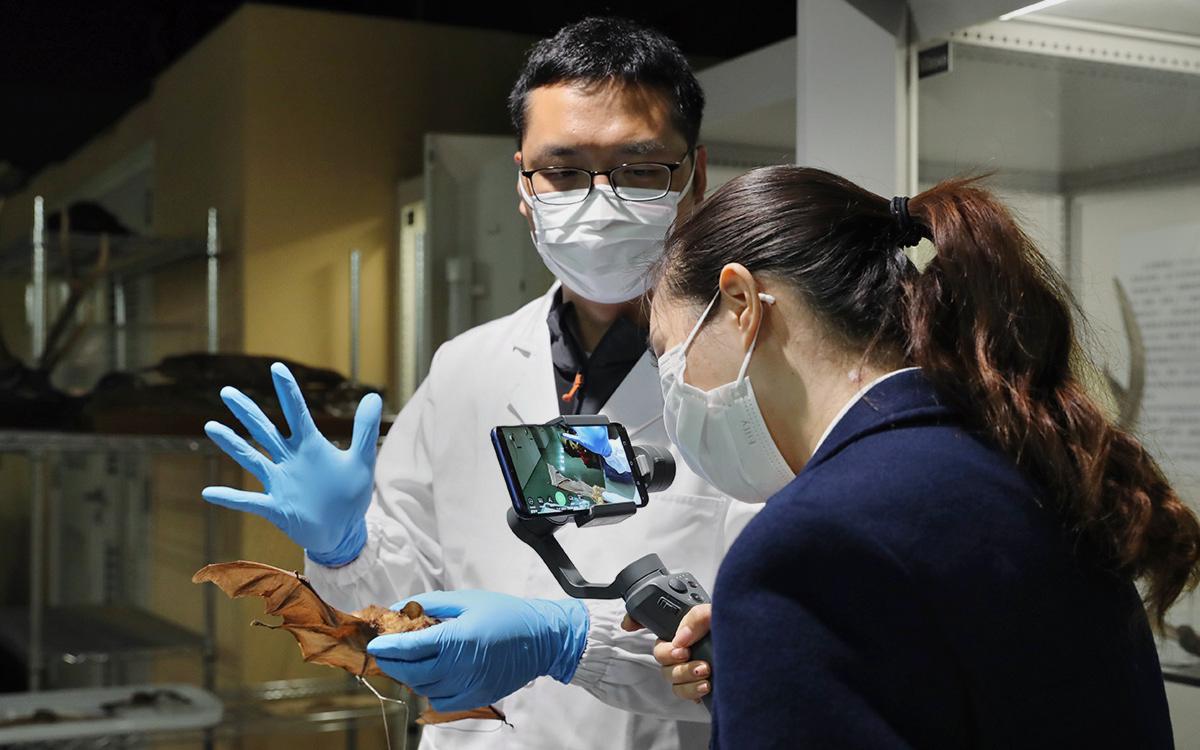 Китайские ученые обнаружили у летучих мышей схожие с SARS-CoV-2 вирусы