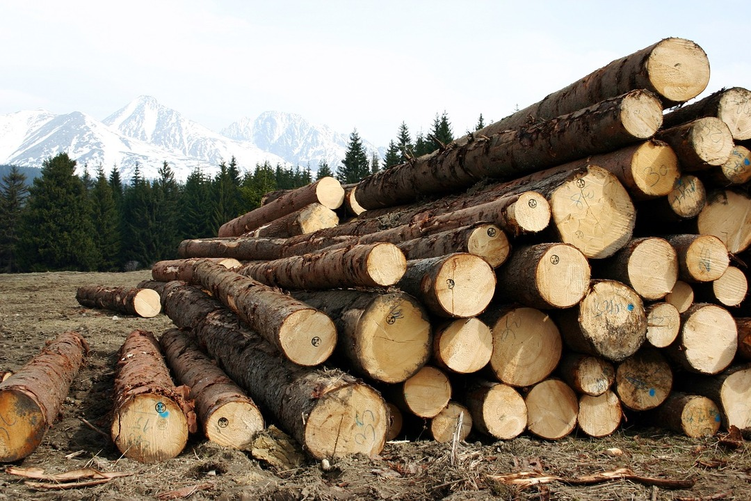 Россиянин организовал незаконную вырубку леса на 19,3 млн рублей