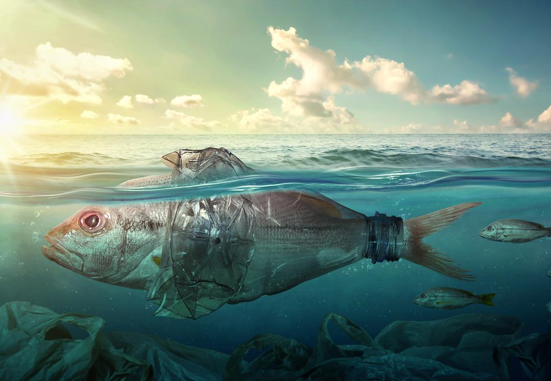 Представлено приложение для поиска пластика в море