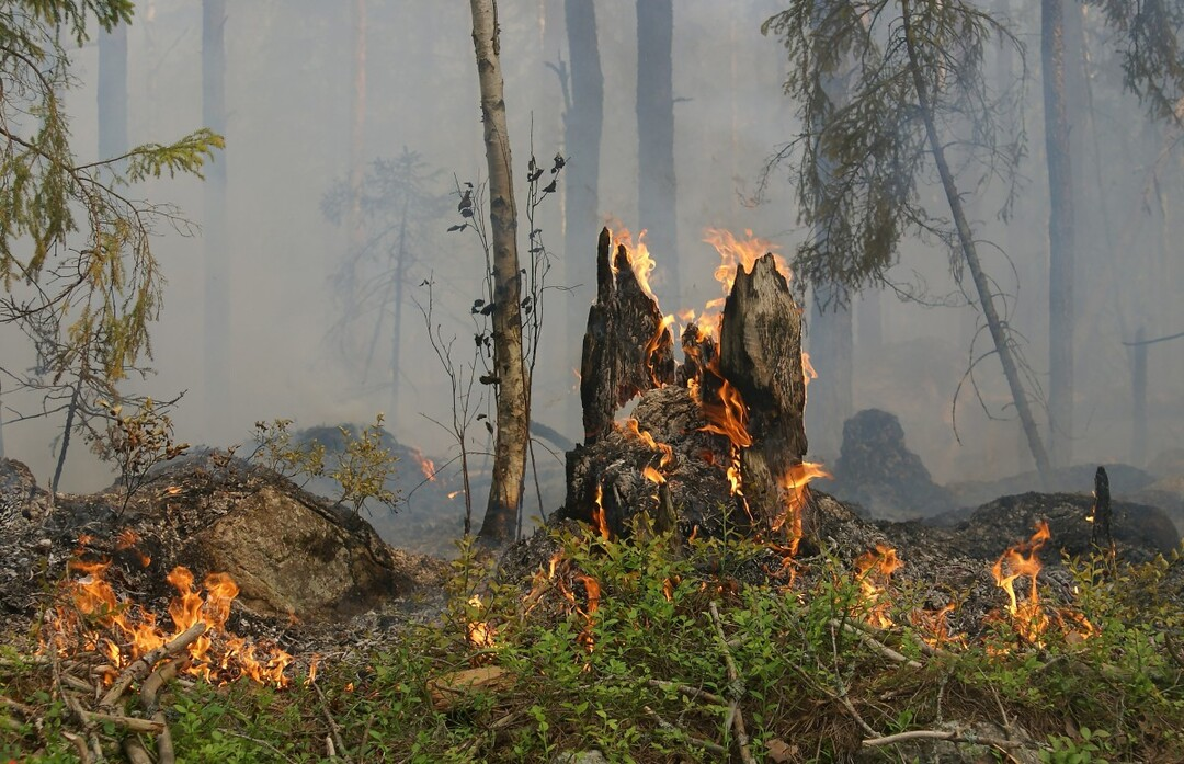 В российском регионе сгорели деревья почти на 1 млрд рублей