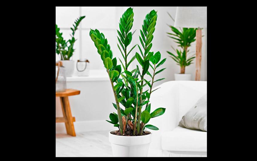 Топ-5 неприхотливых комнатных растений