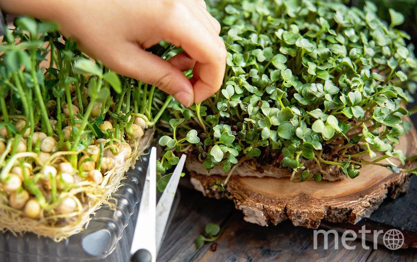 Огород на балконе. Как вырастить урожай в квартире, объясняет эксперт
