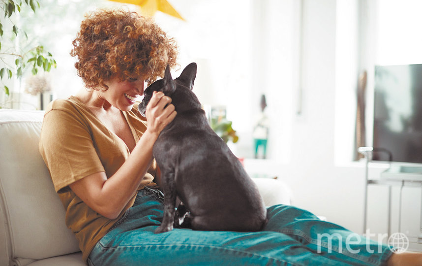 Как собака стала домашним питомцем
