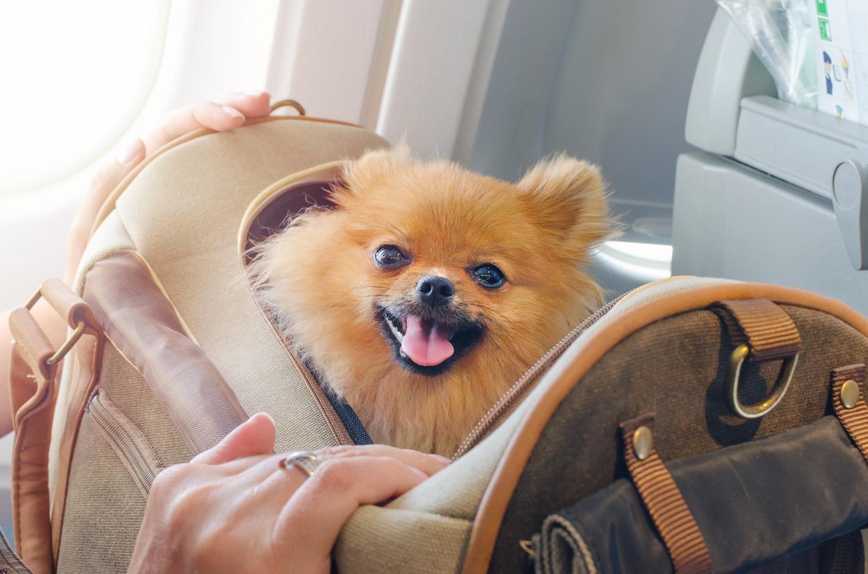 Авиакомпания здорового человека: S7 разрешила перевозить питомцев на соседнем кресле