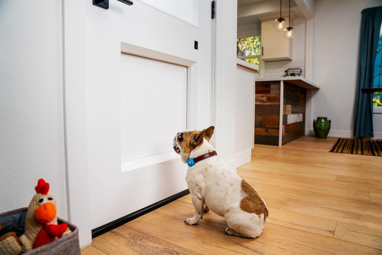 Американская компания создала умную дверь для собак за $3 тыс.