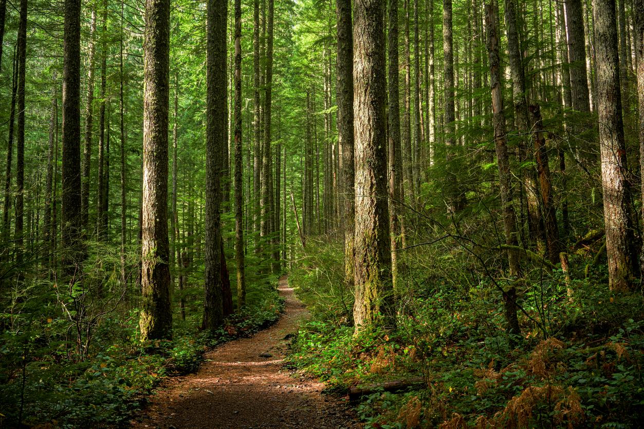 IKEA купила 4,5 тыс. гектаров леса в США, чтобы спасти его от уничтожения