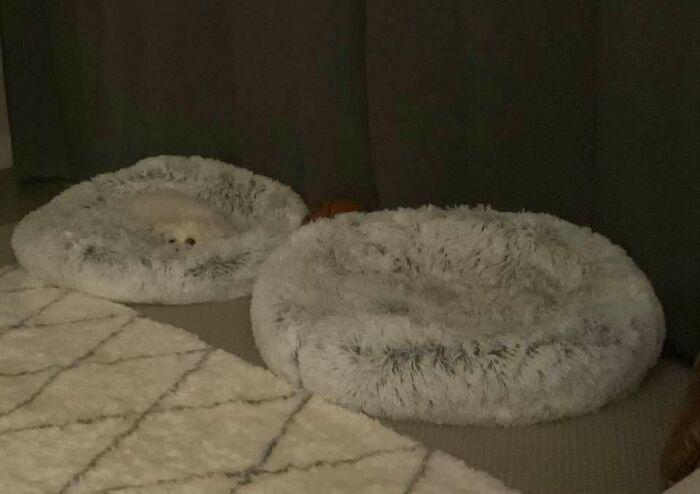 15 милых фотографий, на которых спрятались собаки, и найти их будет не так просто