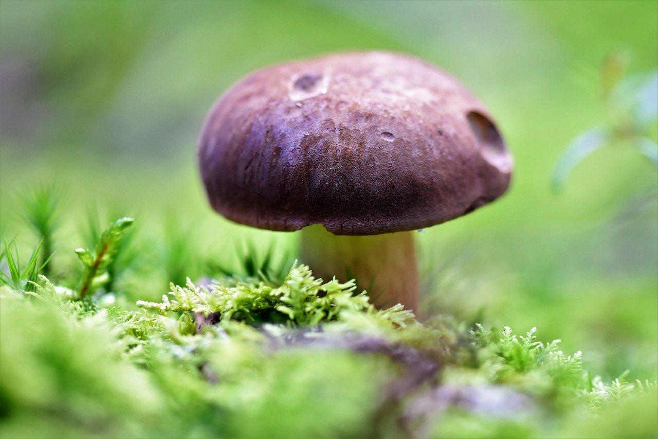 Минприроды опровергло введение новых правил сбора грибов и ягод, напугавших россиян