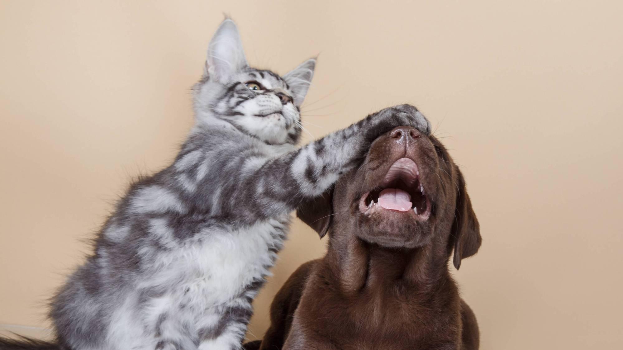 Умные они, ёшкин кот! В споре об интеллекте домашних животных поставлена точка
