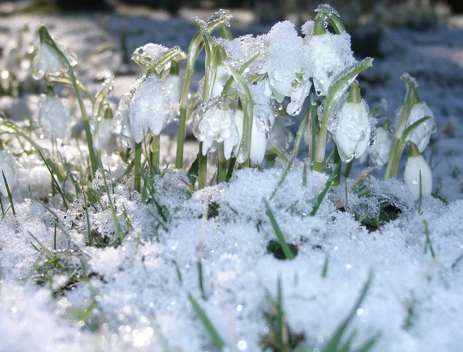 Аллергикам посоветовали привиться от коронавируса до таяния снега
