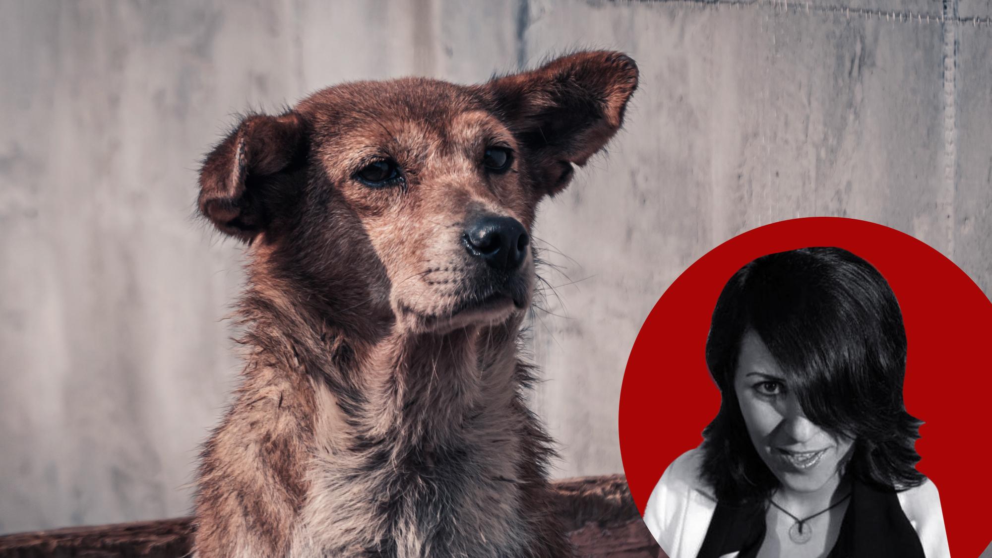 Догхантеры и их методы: вчера — собаки, сегодня — люди