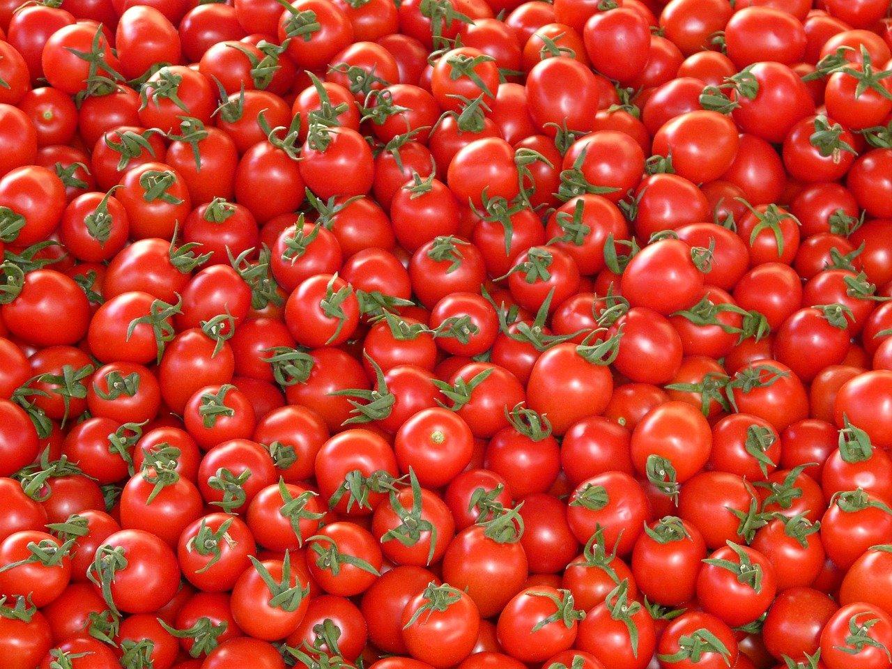 Вирус добрался до помидоров. Из-за него Россия ограничила импорт, но антитела уже вырабатываются на петербургских прилавках