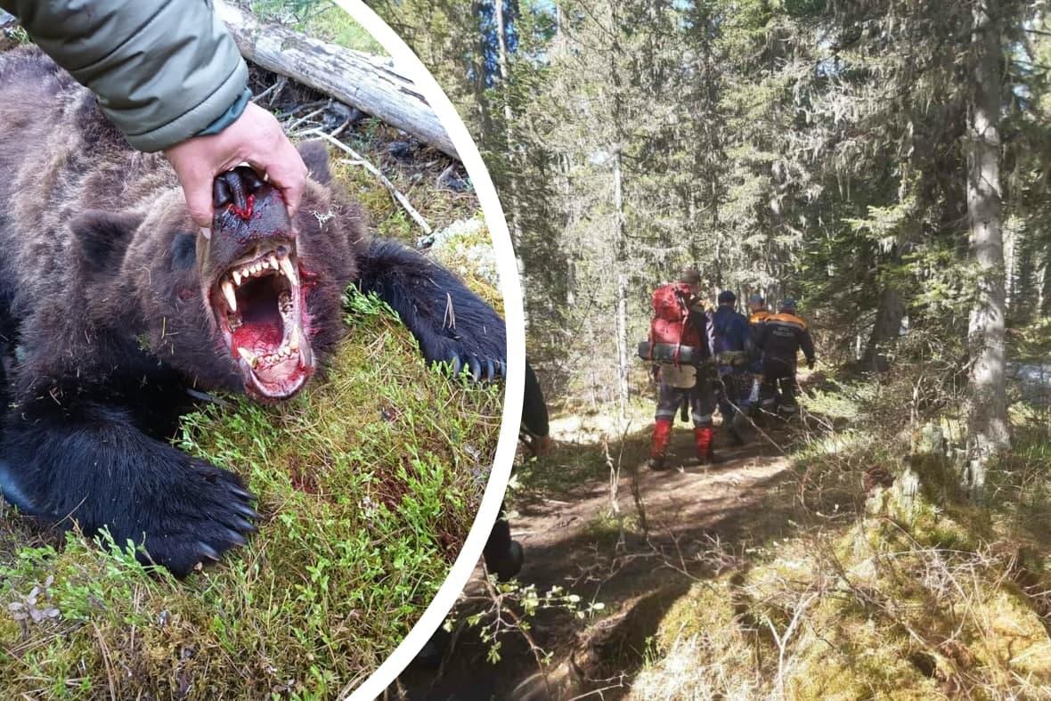Один на один с медведем: как 16-летний подросток попал в лапы к людоеду. Что делать туристам, встретившим дикого зверя