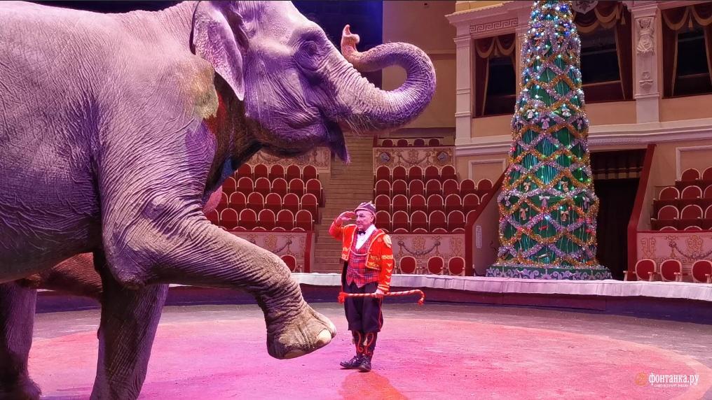 Первое с начала карантина представление Цирка на Фонтанке. Специально для читателей «Фонтанки»